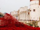 Tower_Poppies_01